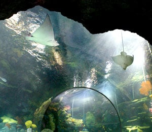 Virginia Aquarium Marine Science Center Unveils Restless Planet Renovation
