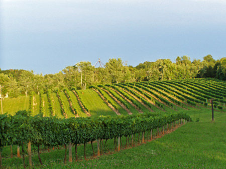 Welcome to Lake Anna Winery!