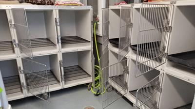 Powhatan Animal Control Office marks milestone of completely empty shelter