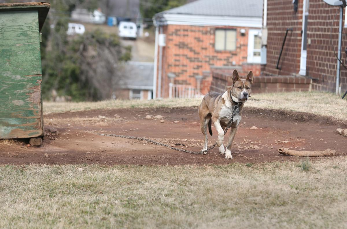 Photos: Ordinance helps get dogs off chains | Virginia