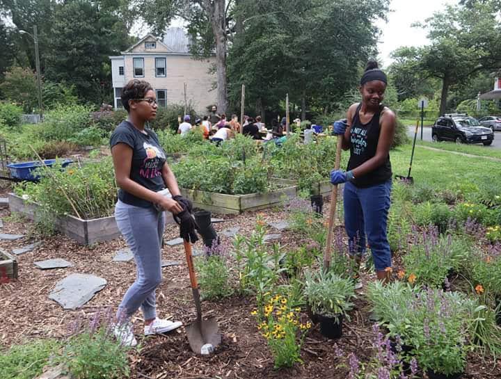 Urban Gardens: Healthy Or Harmful?