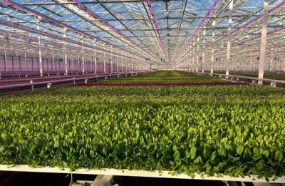 Greenswell Growers
