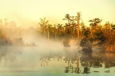 RW - Foggy Sunrise on the North Landing - Moore.jpg