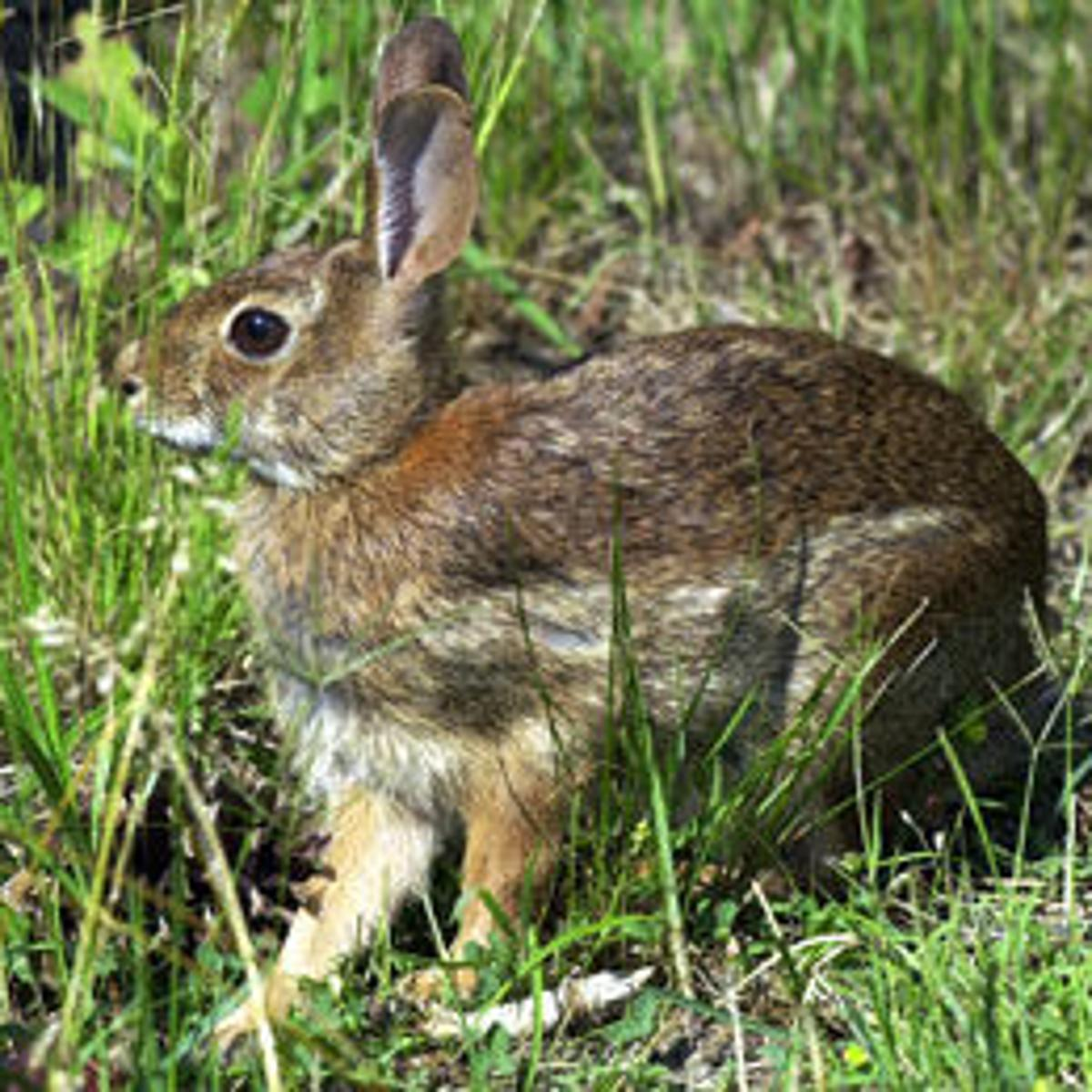Keeping hares out of your garden not easy | Entertainment