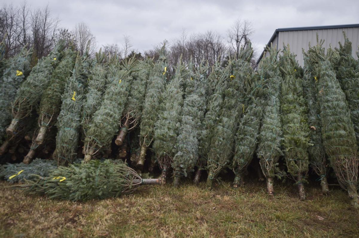 Tree Safety 06