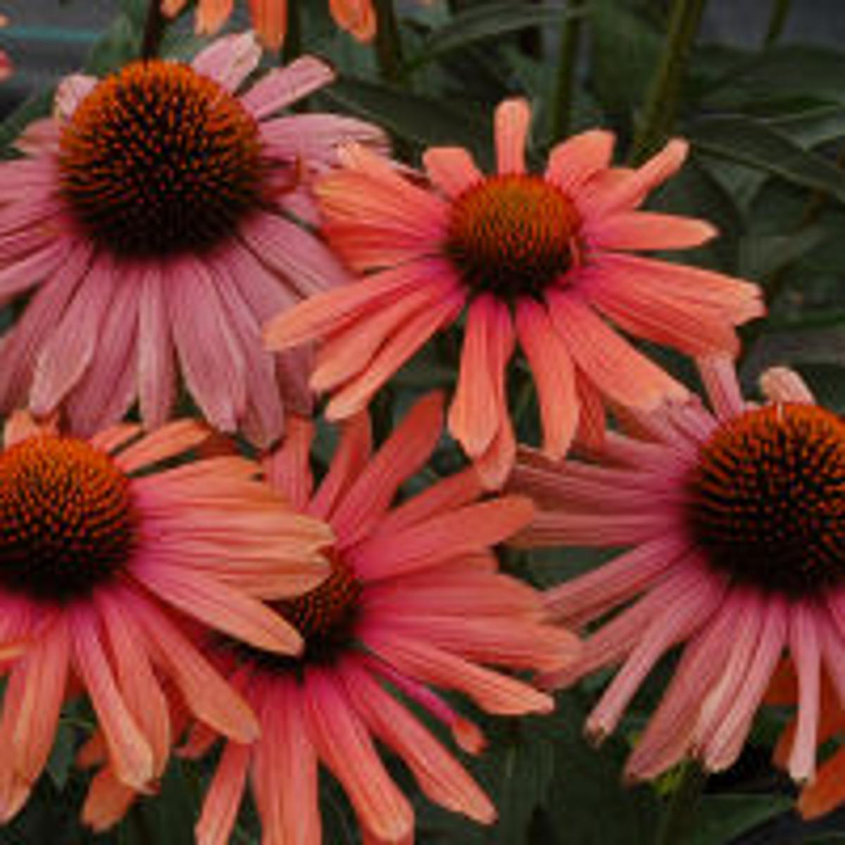 Local Experts Discuss Their Favorite Plants For Spring