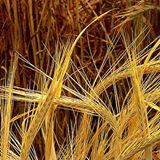 Barleys Soapbox
