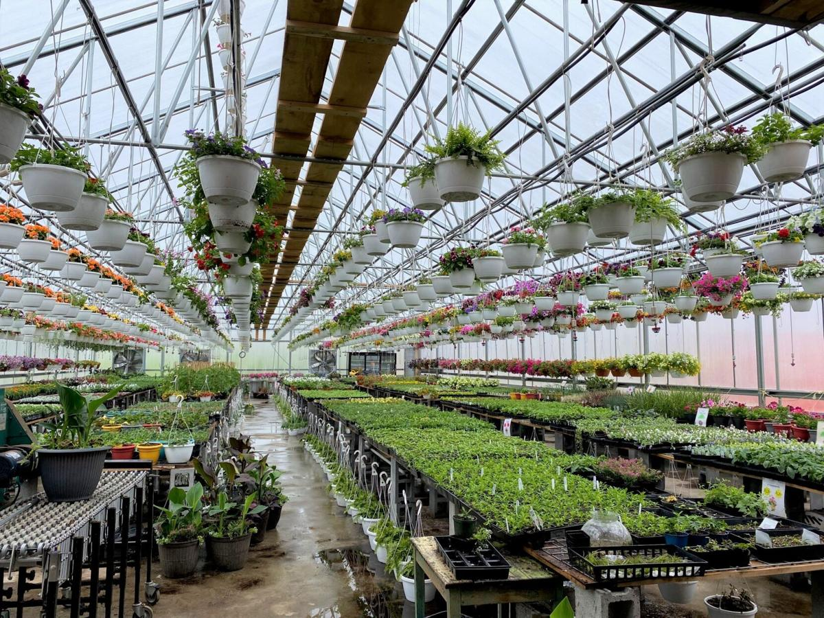 Keller's Greenhouse and Produce on Brandy Camp Road in Kersey