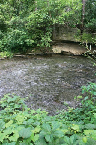 DNR will not take action on Silver Creek smell