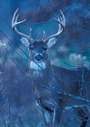 Boyhood bow hunting misses the mark