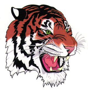 Tiger gridders experience a night to forget