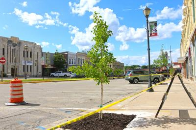 Downtown trees planted-1