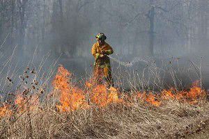 Fire burns about 50 acres