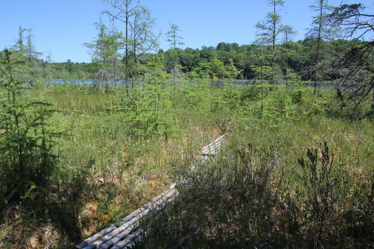 Hunt Hill Audubon Sanctuary 2.JPG
