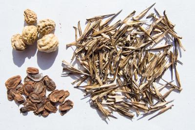 Seeds 4095