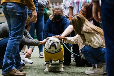 Jerry the Bulldog Time Out for Tech February 2021.jpg