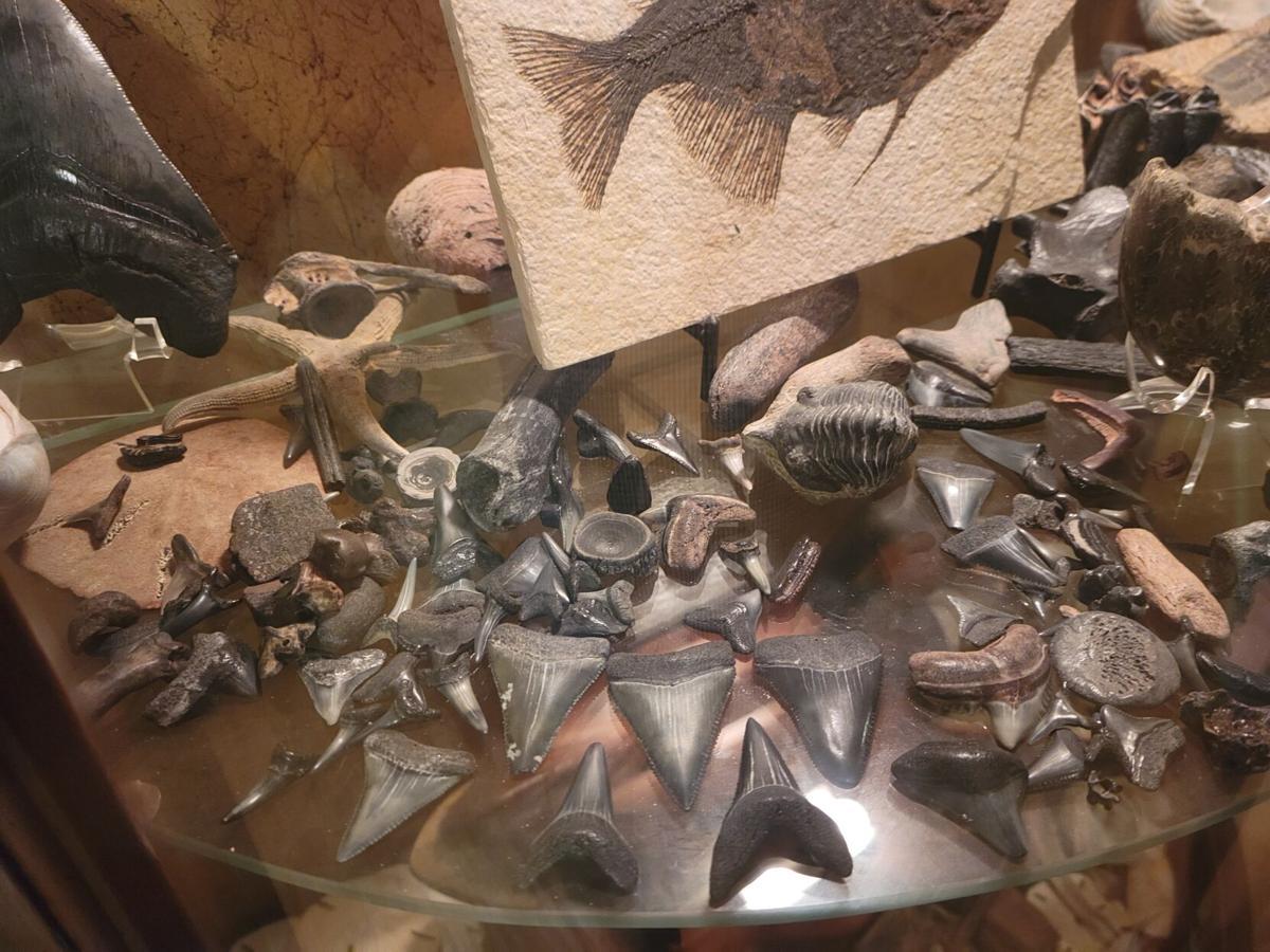 Shark tooth haul
