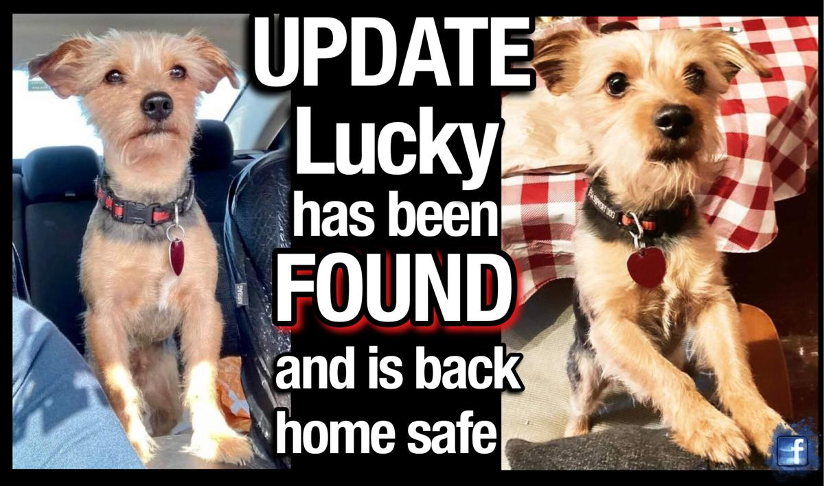 UPDATE: Stolen service dog 'Lucky' found and returned home safe