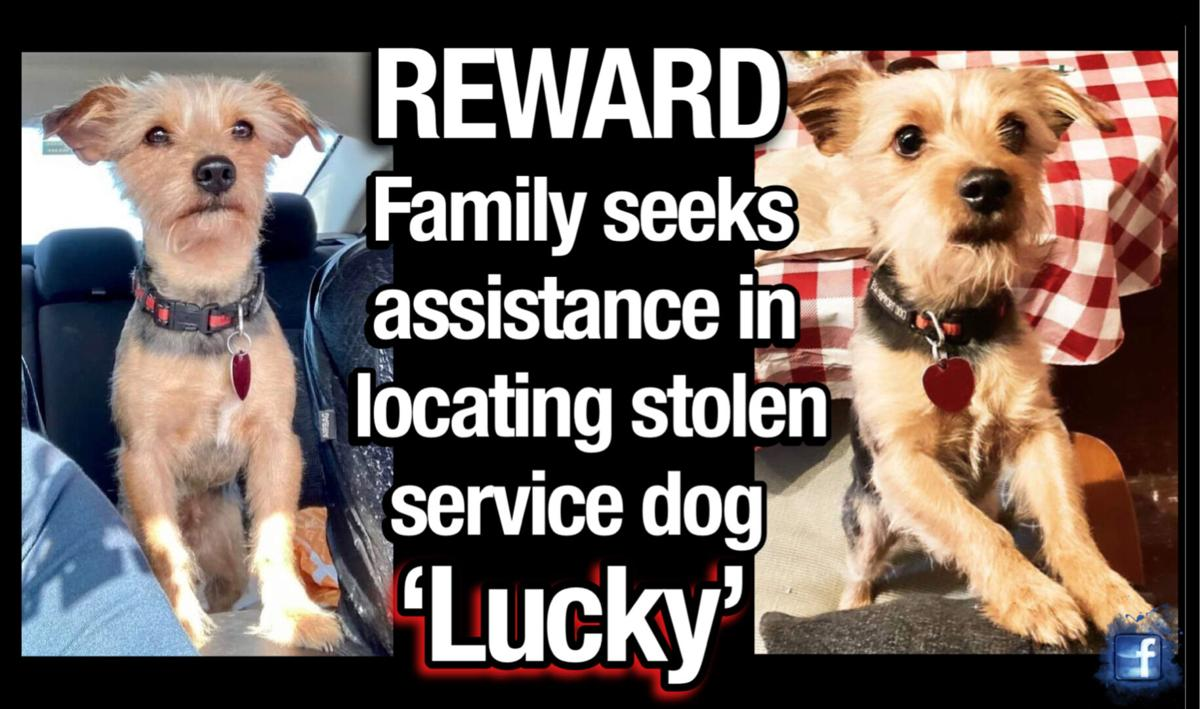 REWARD: Family seeks assistance in locating stolen service dog 'Lucky'