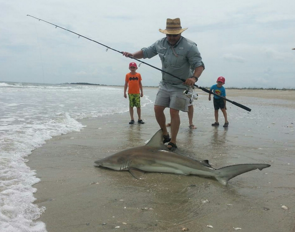 Shark on shore