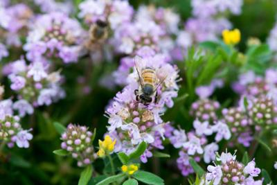 Planting different types of tiny flowering plants among grass stalks is a great way to attract bees and other pollinators that help keep our farms productive and our produce aisles well-stocked.