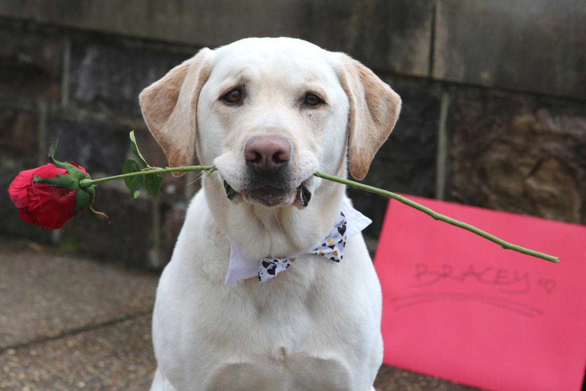 Dog Day Care Cincinnati