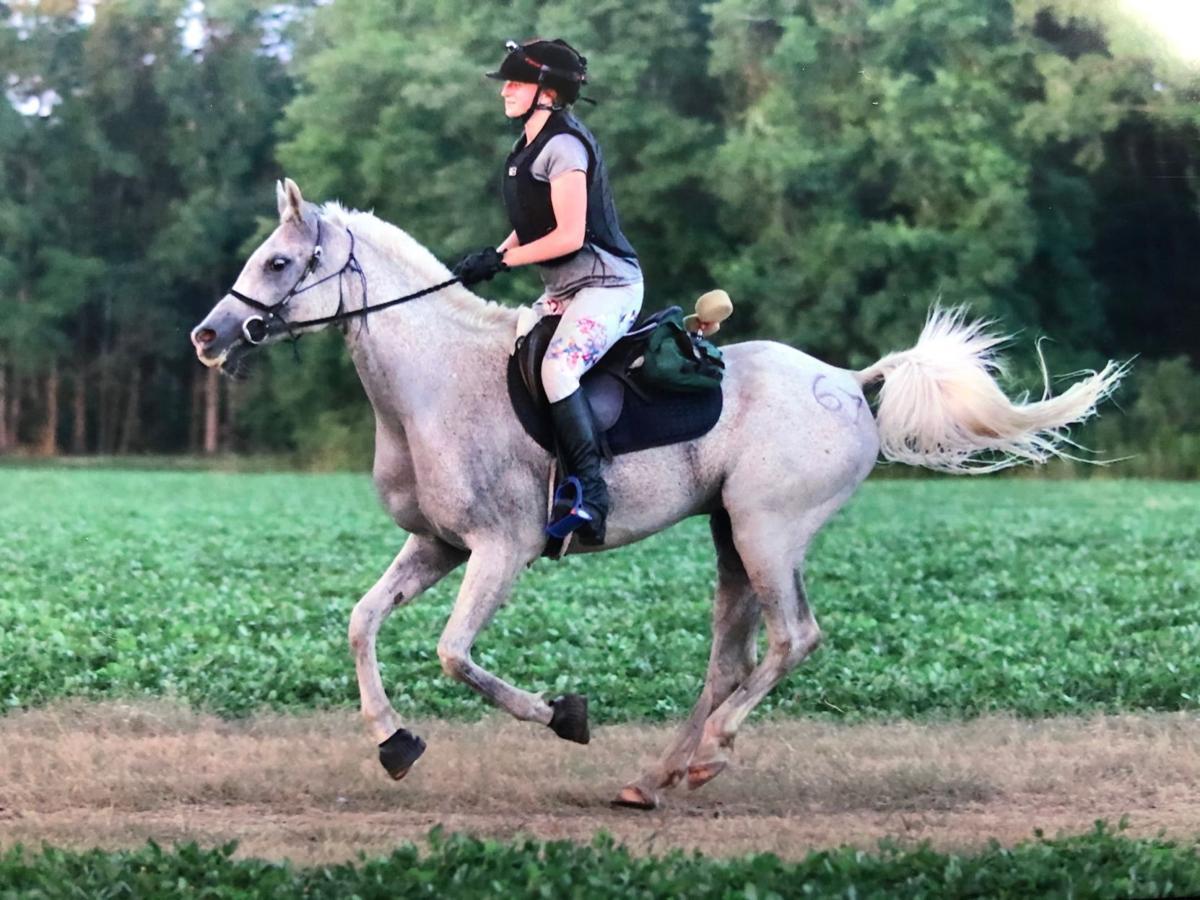 trail horse 1.jpg