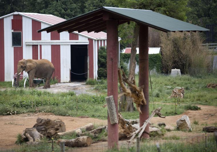 Natural Bridge Zoo