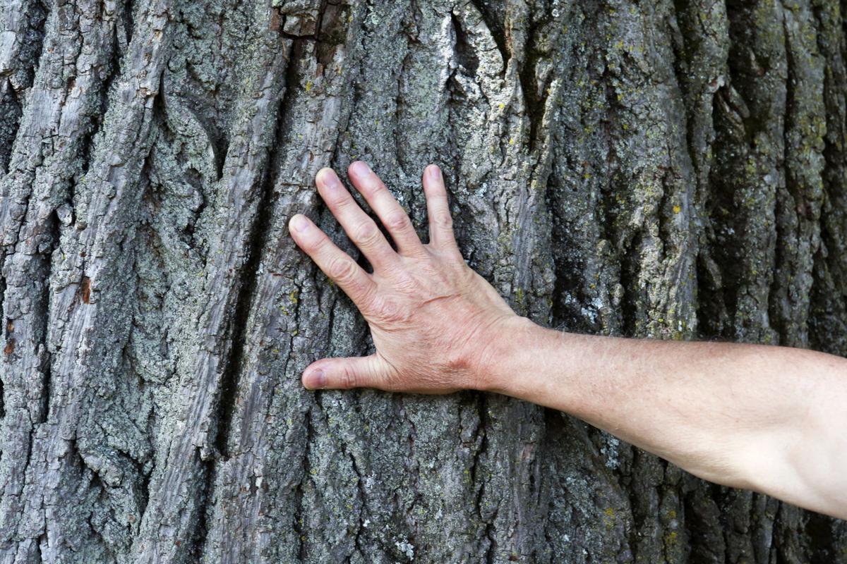 MG RU Champion Tree 052419