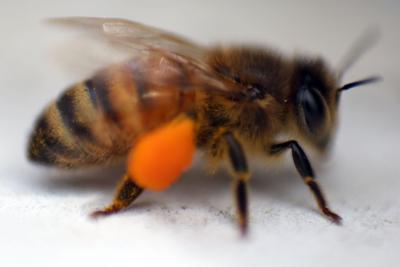 mg bees 042016 (copy)