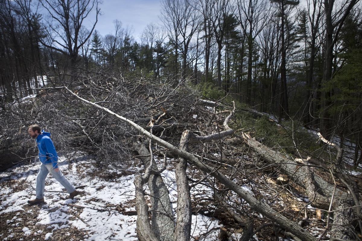 hr treecutting 032218 p03
