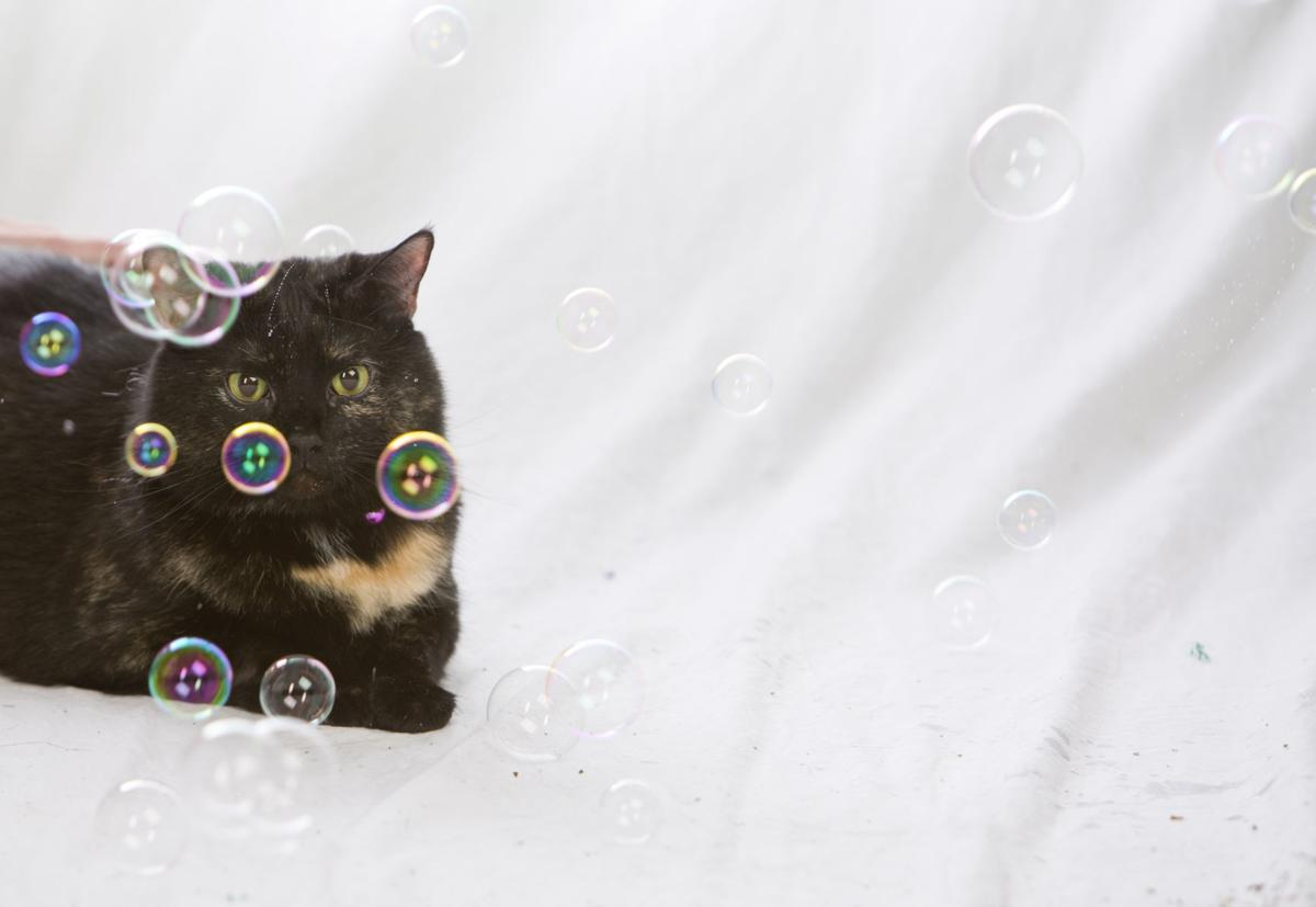 Celebrate International Cat Day on Sunday: The anatomy of a cat ...
