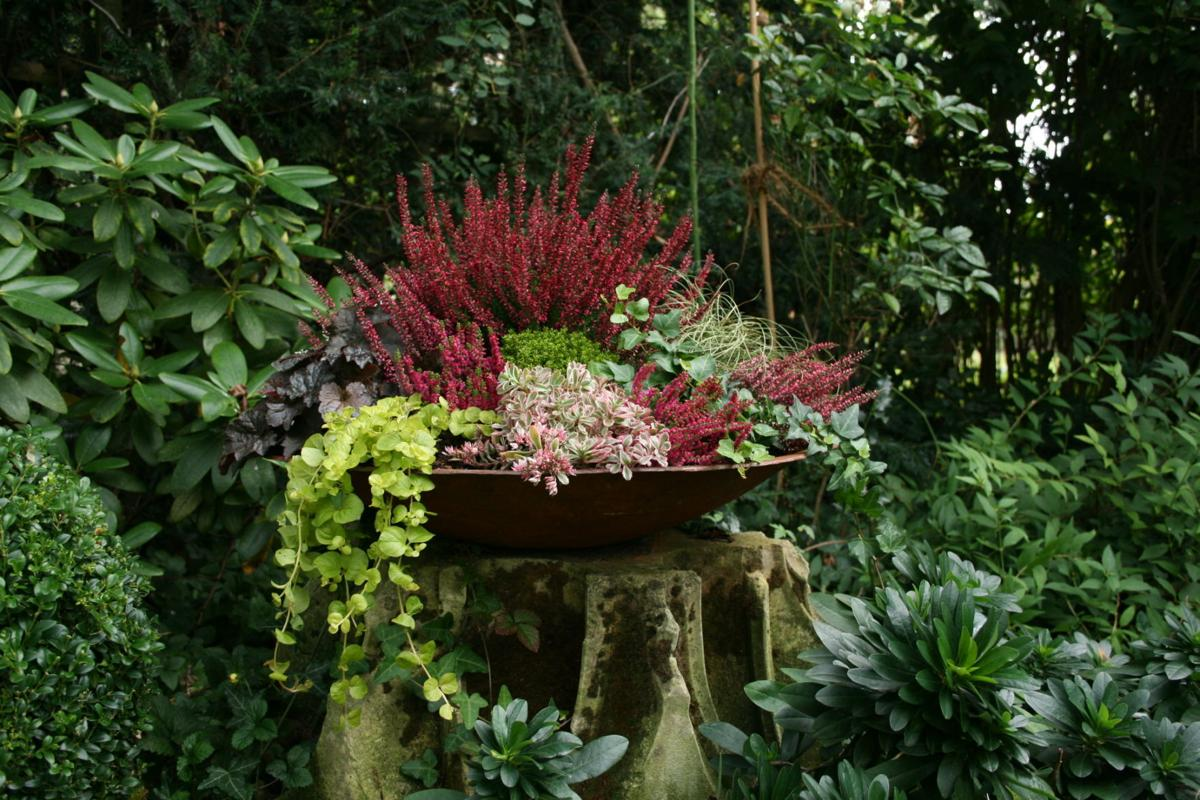 fanatical botanical winter containers add welcome touch for