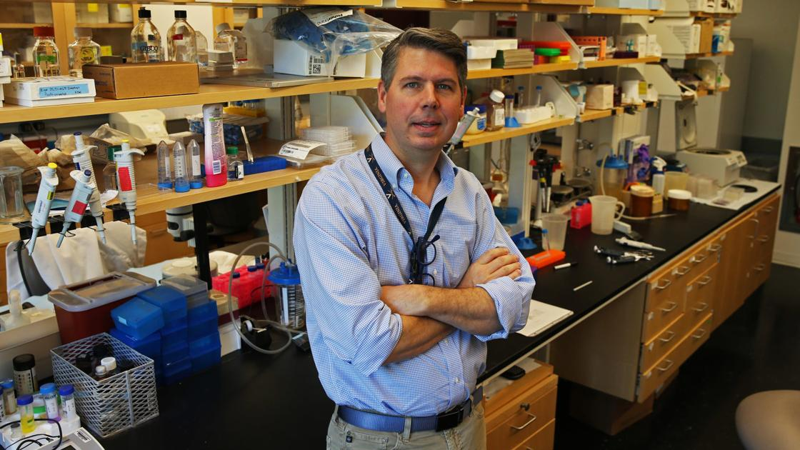 UVa study helps further understanding of red meat allergy caused by ticks