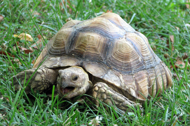 Stray tortoise surprises Richmond park visitors | Virginia | roanoke.com