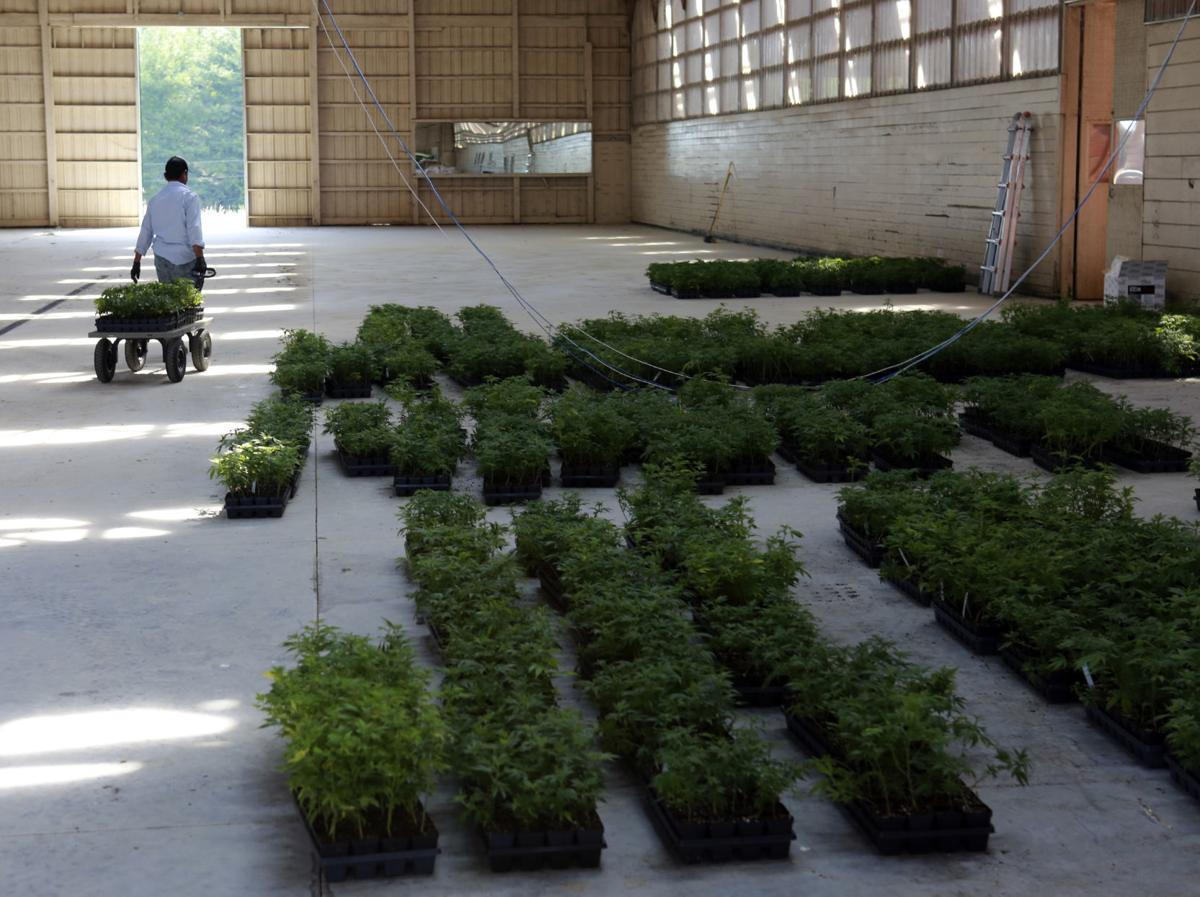 Virginia's commercial hemp rush launches after changes in laws