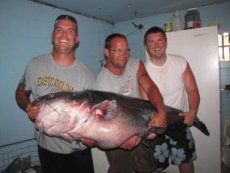 How did a Virginia lake produce a 143-pound catfish?