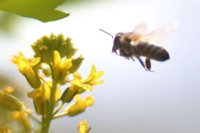 mg bees 042016