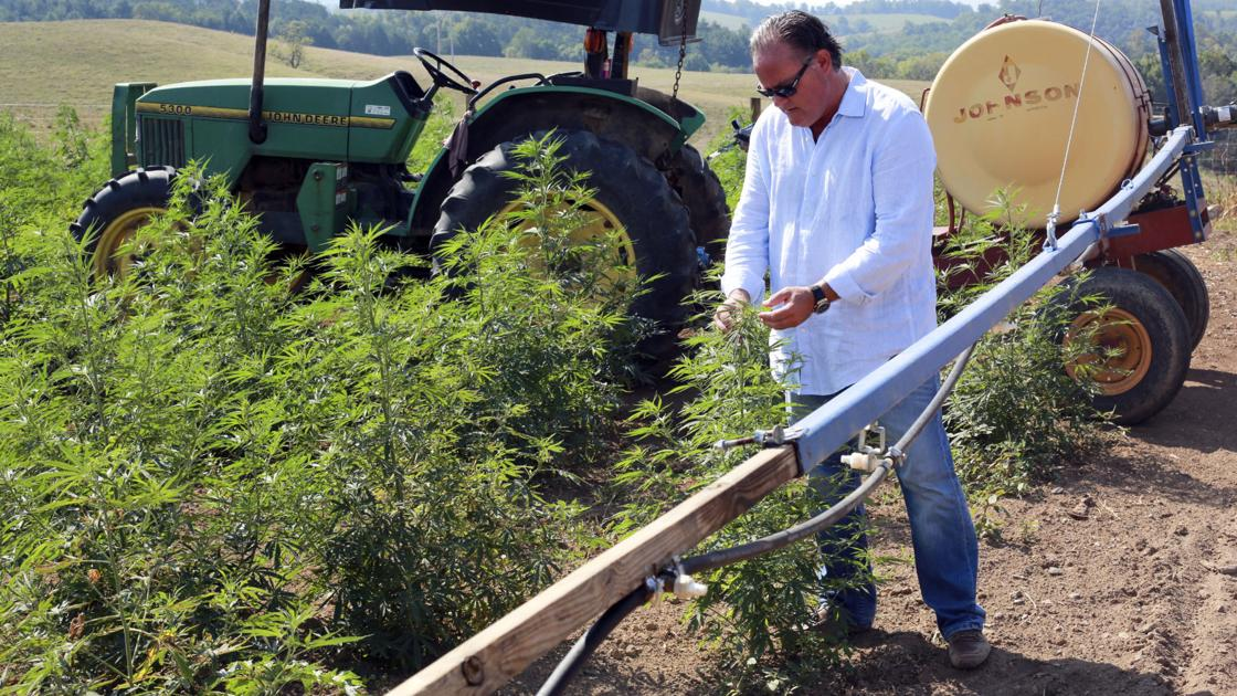Hemp business expands from Kentucky to Pulaski County