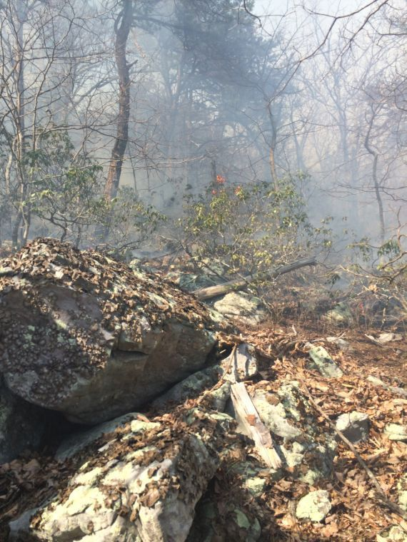 Buchanan brush fire fully contained