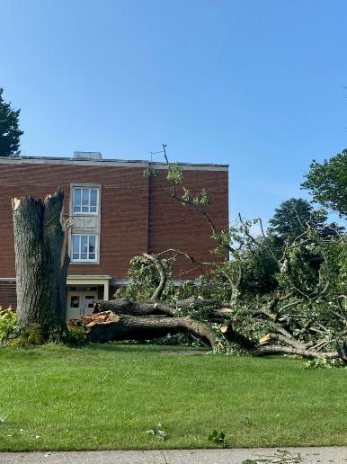 Radford University tree