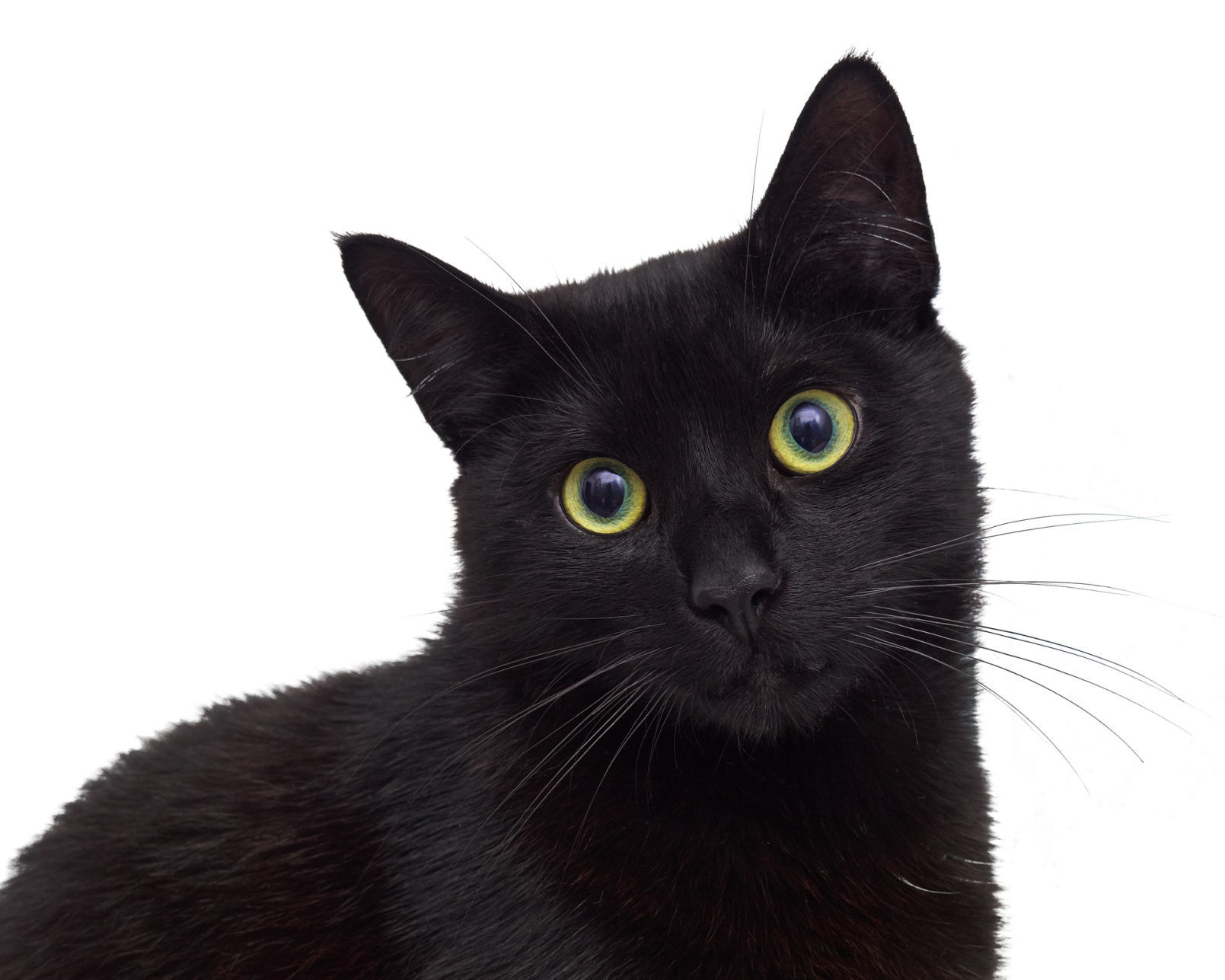 Black Cat nude 781