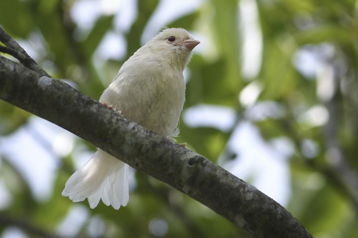 ms whitesongsparrow 062118 p04