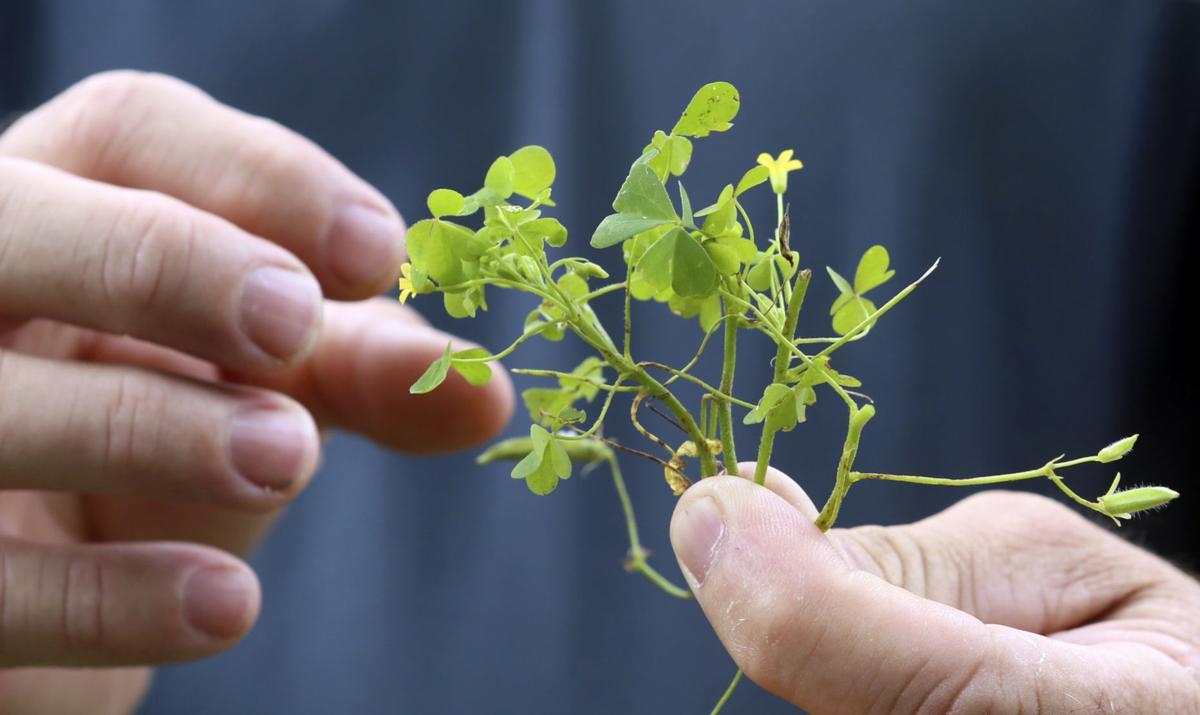 MG Edible Plants 062320
