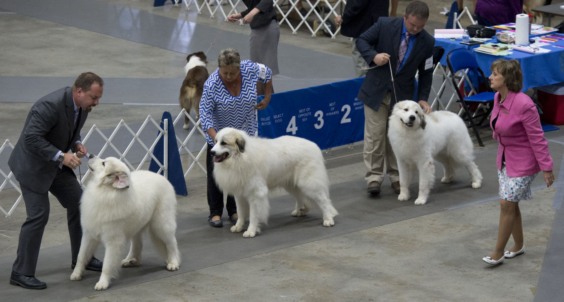 River Valley Cluster Dog Show Times