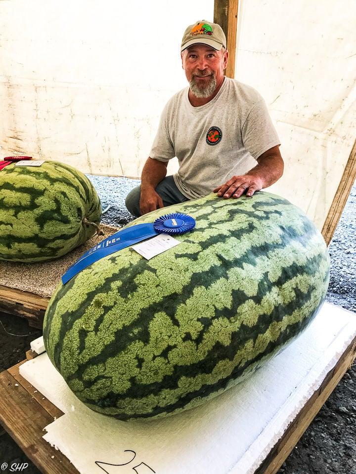 254 Pound Watermelon Breaks State Fair Of Virginia Record