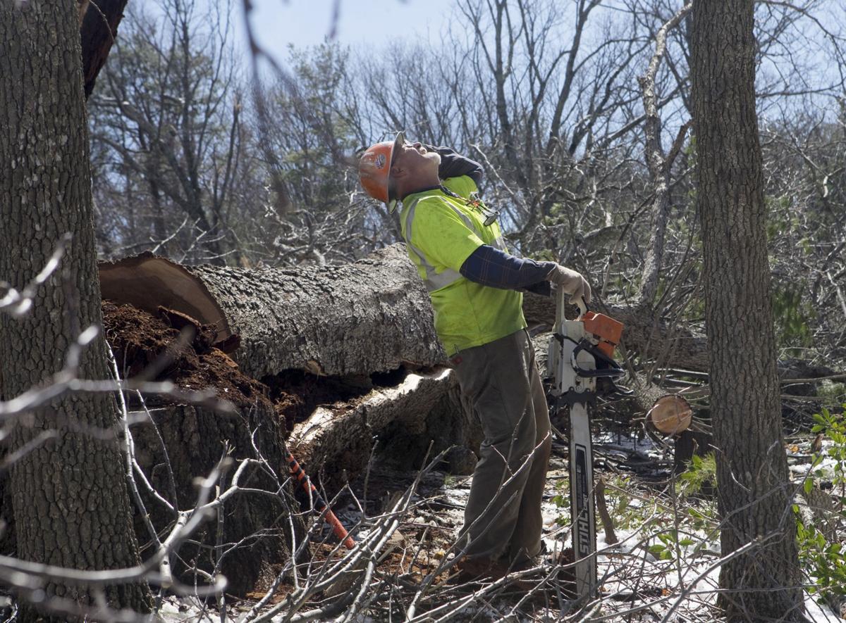 hr treecutting 032218 p02