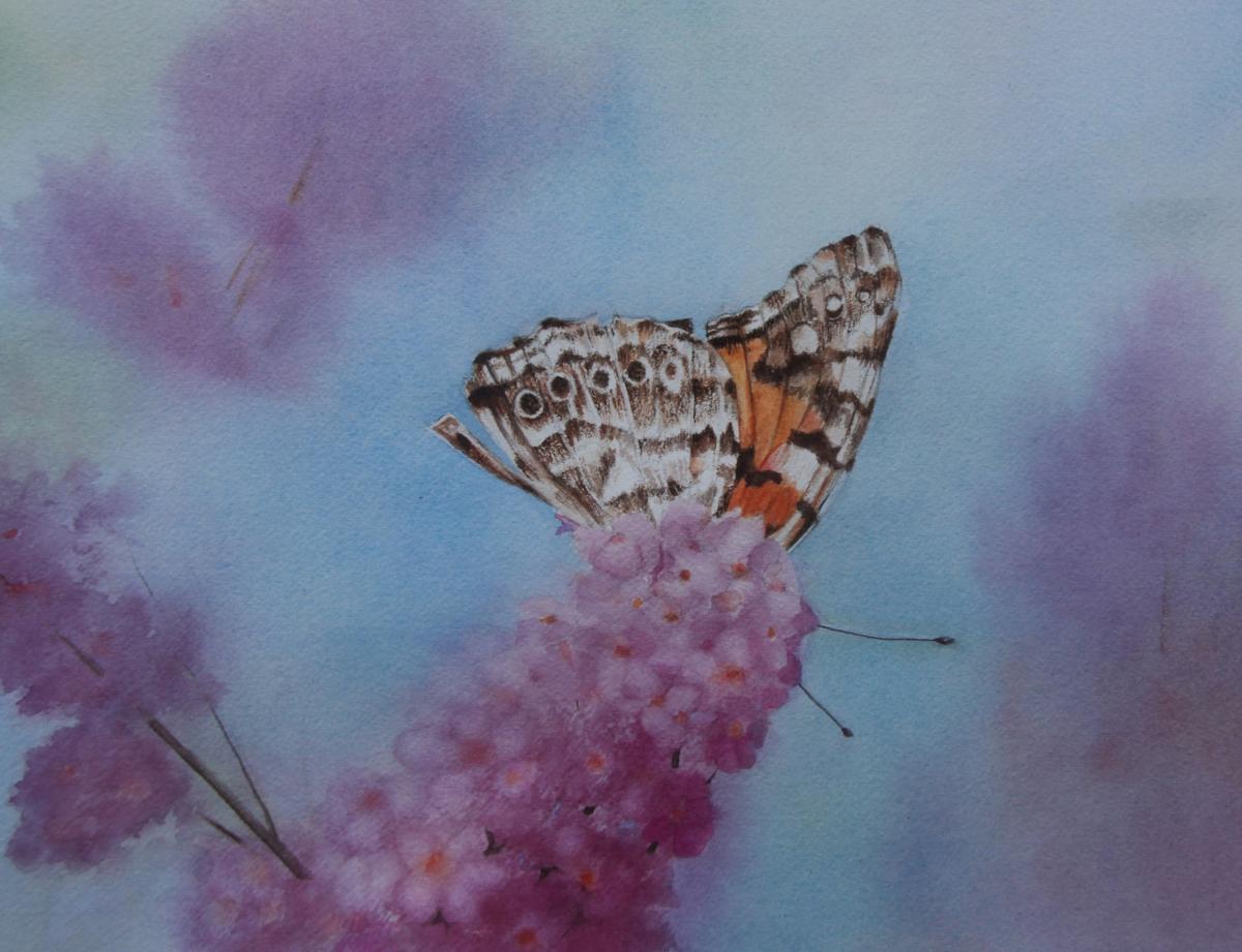 Betty Moore Painted Lady watercolor .jpg