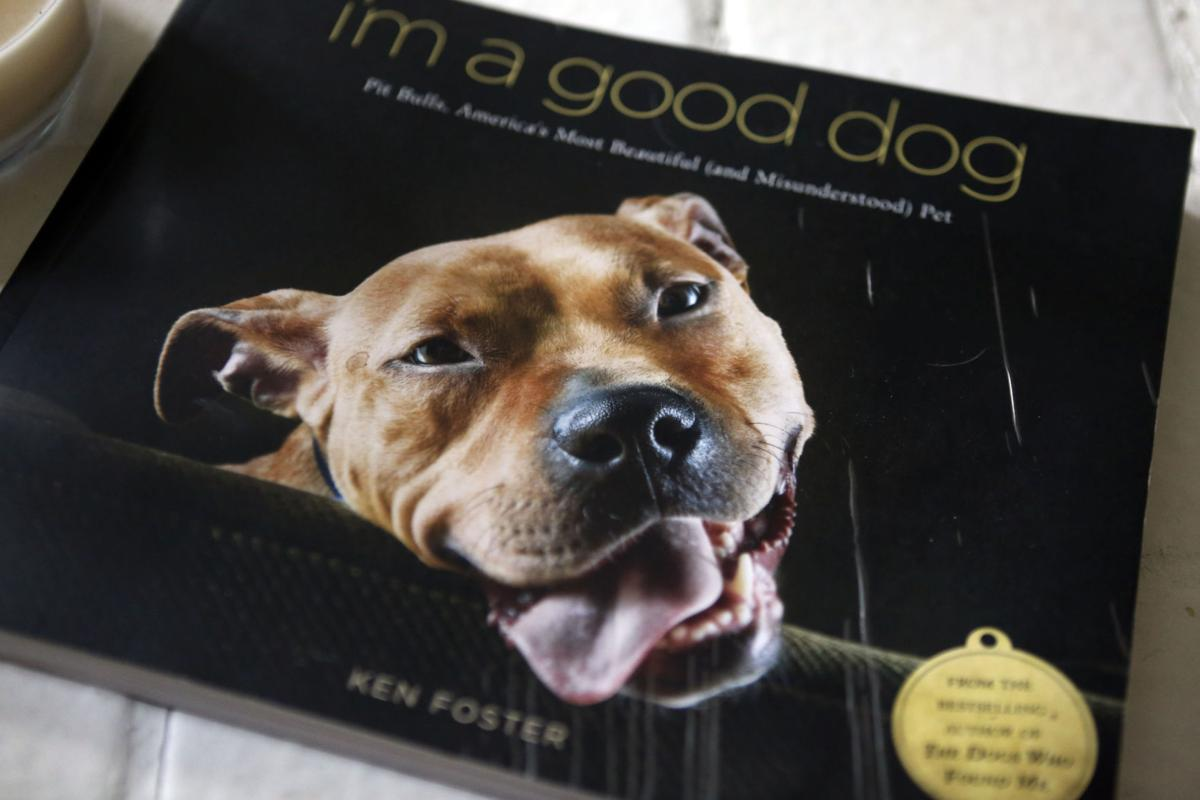 pit bulls still attracting controversy blacksburg news roanoke com