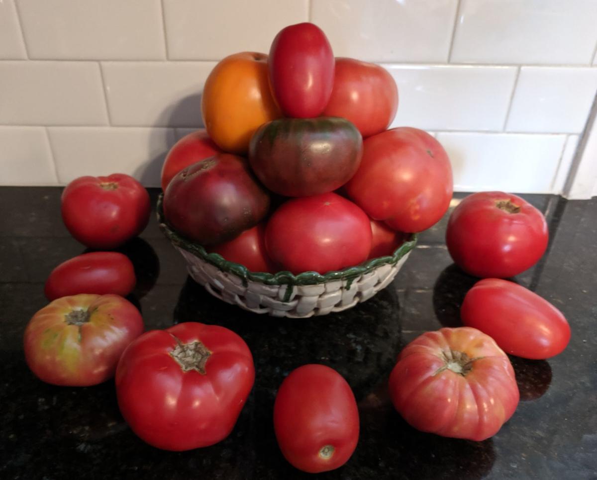 tomatoes_dan's_haul